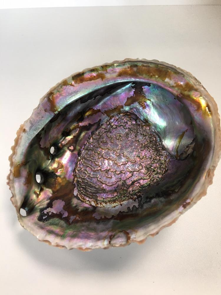 Abaloneskjell